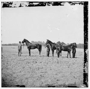 Grant's_horses