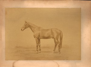 1882_pic_war_horse